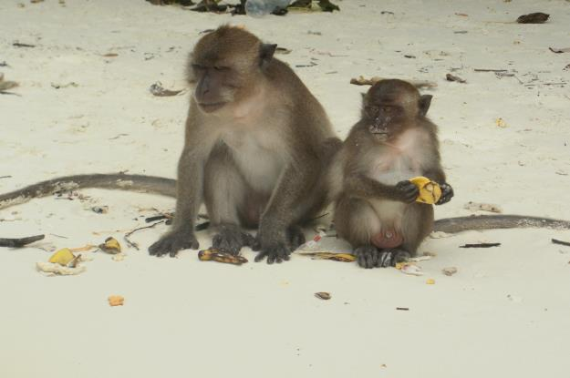 Monkey_Beach_Phi_Phi_Don_1
