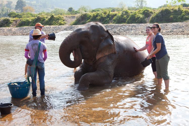 Chiang_mai_elefantes