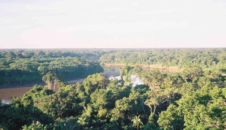 torre canopy tambopata en la amazonia peruana